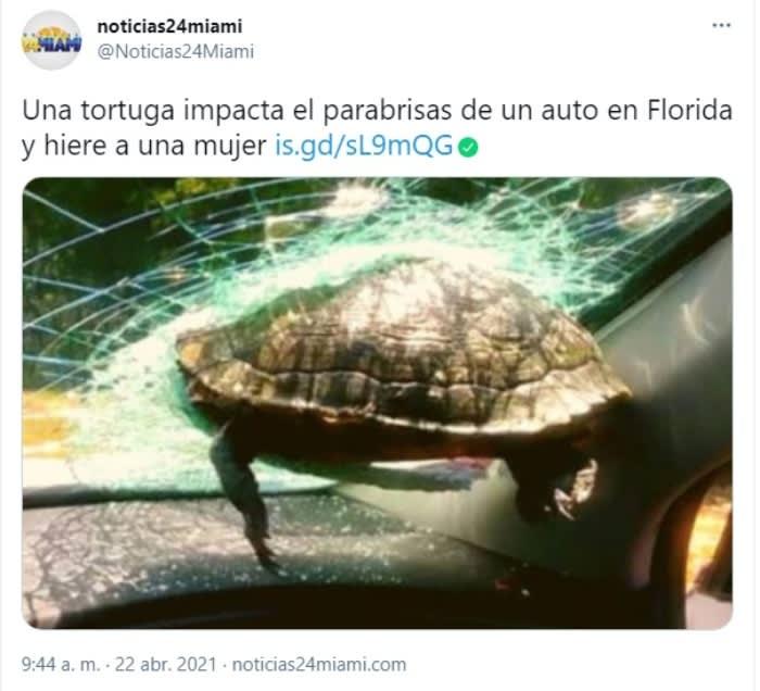 Tortuga impacta parabrisas 2