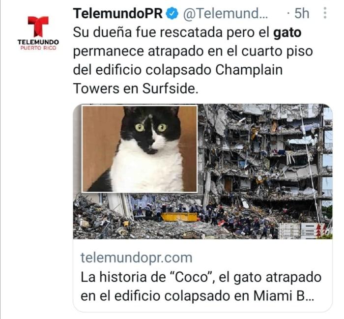 Gato coco en edificio