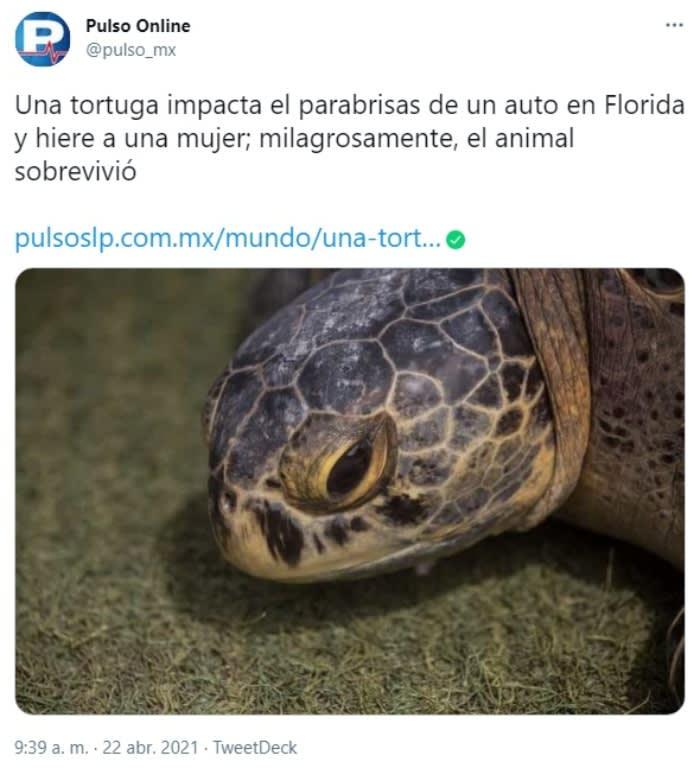 Tortuga impacta parabrisas