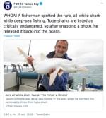 Tiburón albino, completamente blanco es hallado en Gran Bretaña