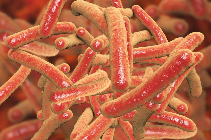 Melioidosis cases in the United States