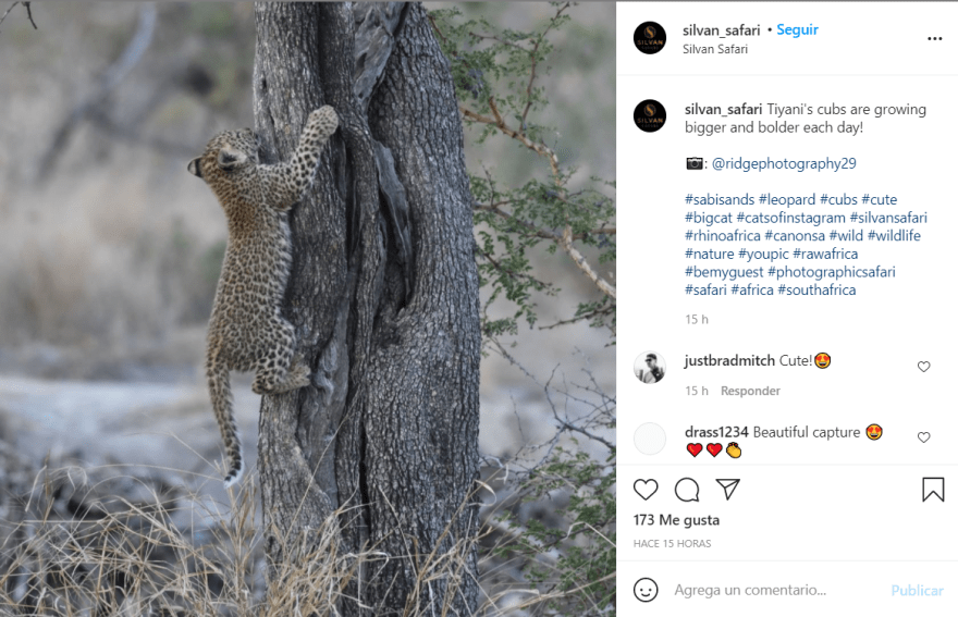 Leopard attacks model: Feline attacks a child in India