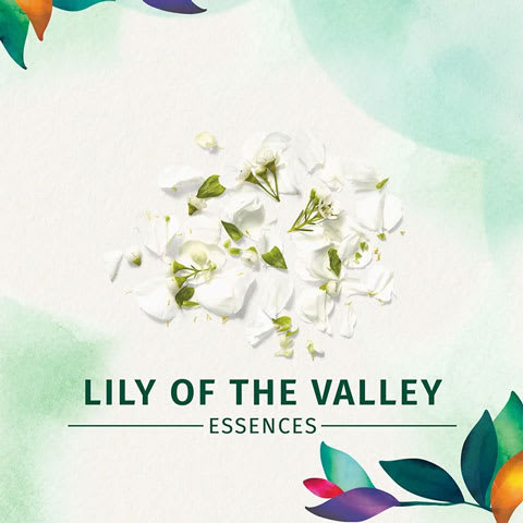 Lilly of the valley essences