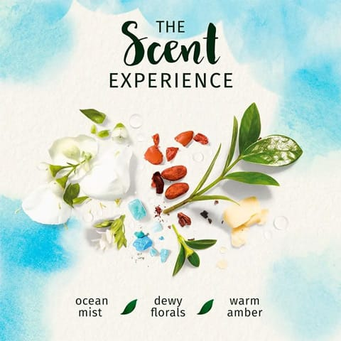 The scent experience