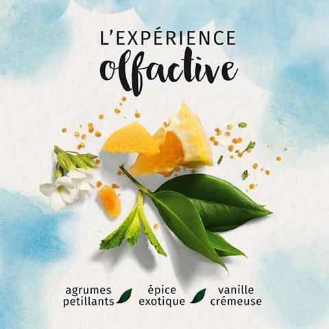 L'experience olfactive