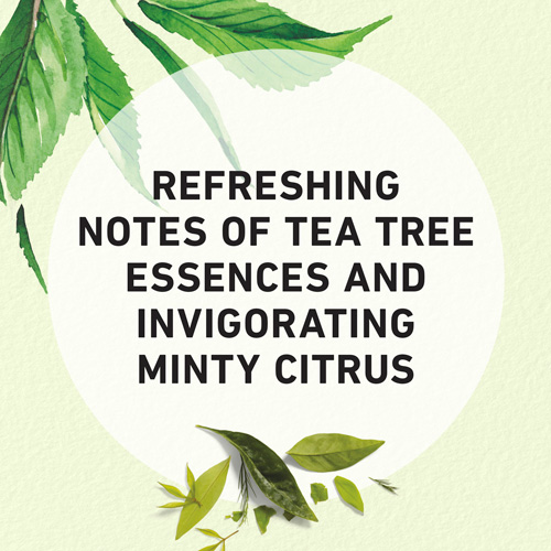 Refreshing Notes of Tea Tree Essences and Invirogating Mint Citrus