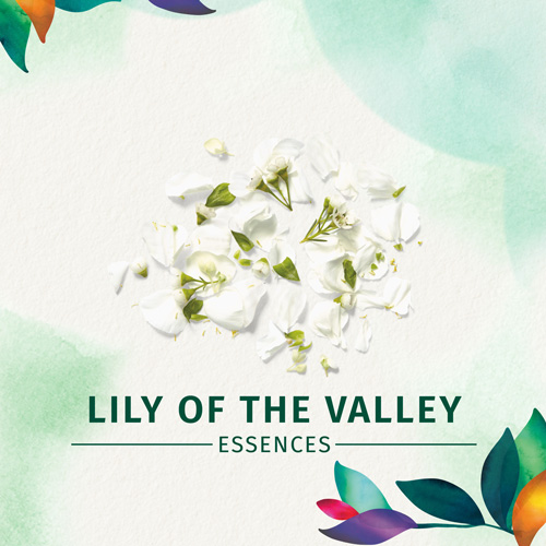 Lily of the valley essences