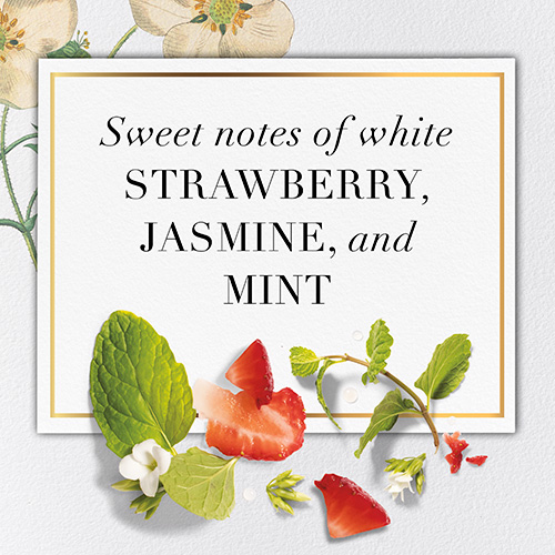 Sweet notes of white Strawberry, Jasmine, and Mint