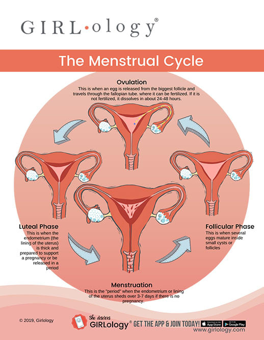 Girlology Menstrual Cycle Phases graph