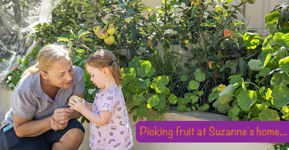 Picking fruit at Suzanne's Home - My Home Your Home Family Day Care
