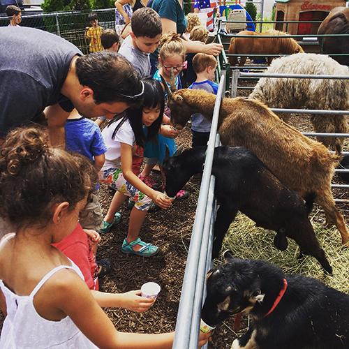 Camp Zoo Fun Frenzy