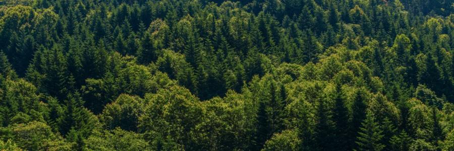 le bois est-il renouvelable