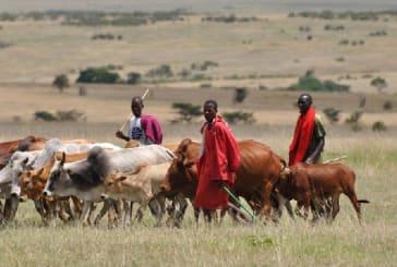 Chiefs summoned by Berekum Traditional Council over Fulani herdsmen
