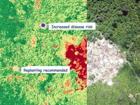 Fjärranalys blir ett allt viktigare beslutsverktyg för kakaobönder.