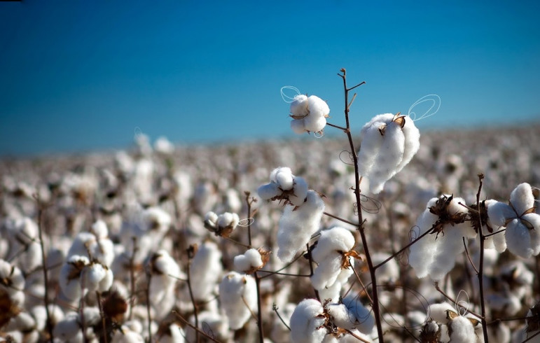 """d704df1ef88 """"This is really just the first step for us. With Cotton + Corn"""