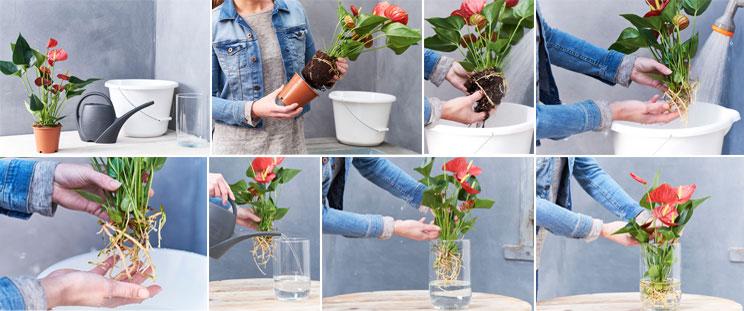 odla blommor utan jord snyggt annorlunda och enkelt bakker skandinavien. Black Bedroom Furniture Sets. Home Design Ideas