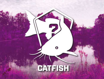 Catfish Bundle