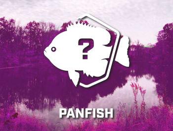 Panfish Bundle