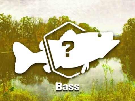 Mystery Bass Bundle
