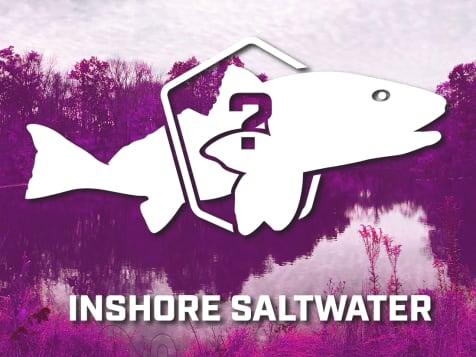 Saltwater Bundle