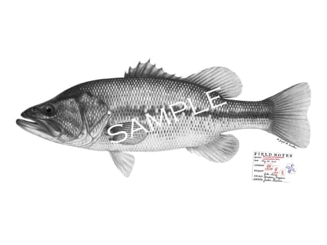 Personalized Fish Prints - up to 30""
