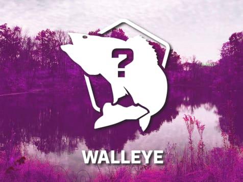 Walleye Bundle