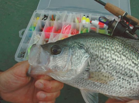 Panfish Tackle: How To Stock Your Tackle Box Like A Crappie Pro