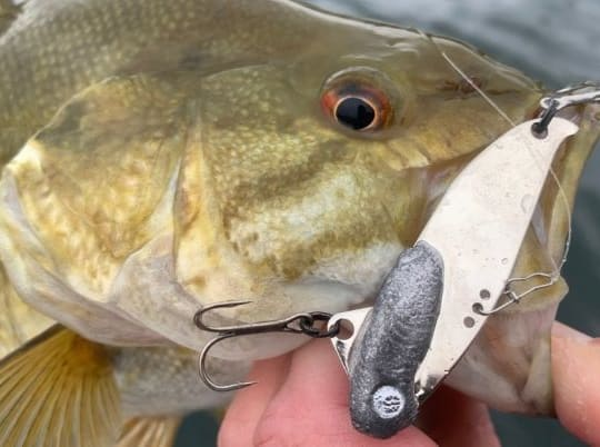 5 Cold Water Lures That Will Catch You More Bass