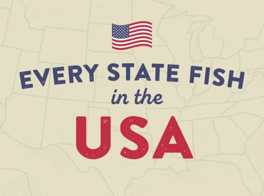 The Official Freshwater Fish For Every  State In America