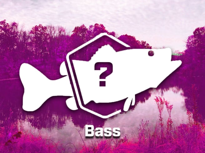 Bass Bundle