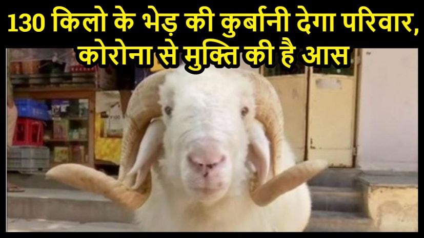 ईद-उल-अजहा पर्व पर 130 किलो के भेड़ की कुर्बानी देगा परिवार,कोरोना से मुक्त्ति की है उम्मीद