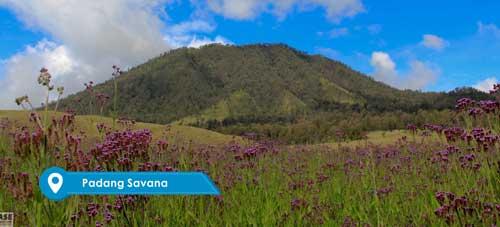 Padang Savana Bromo