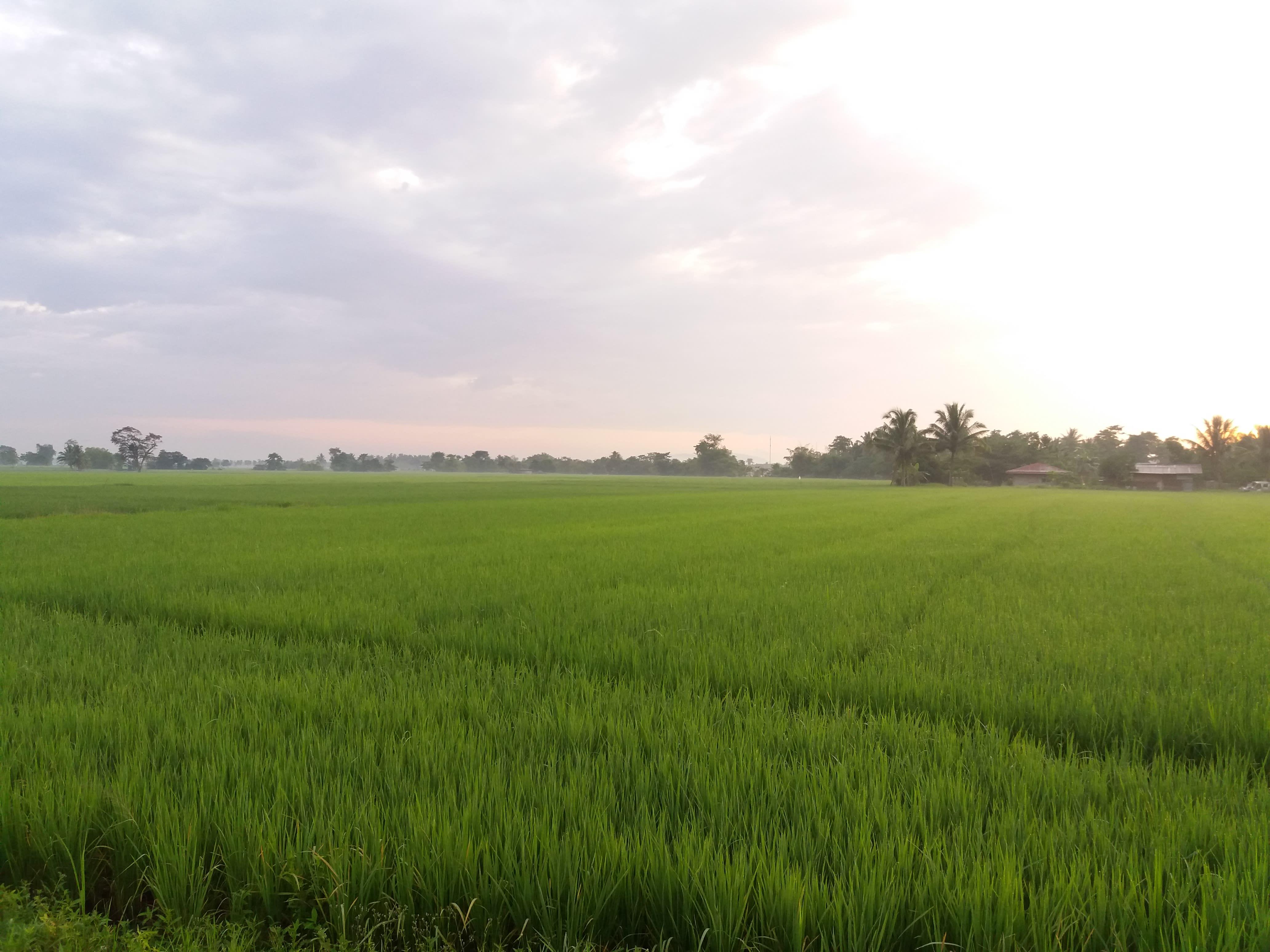 Mindoro Rice Land 2 hectares