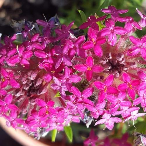 Deep Dream Rice Flower