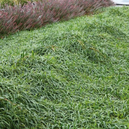 Green Mulch