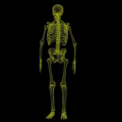 Bone / Skeletal