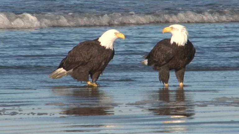 Eagles Hit the Beach