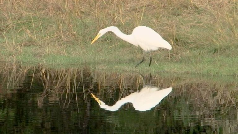 No Regrets About Egrets