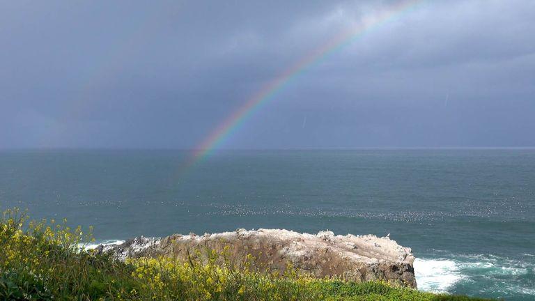 Rainbow Reverie