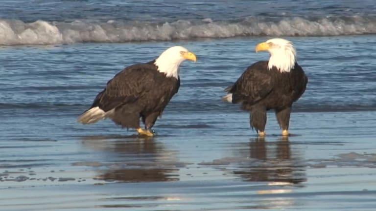Eagles Hit the Beach