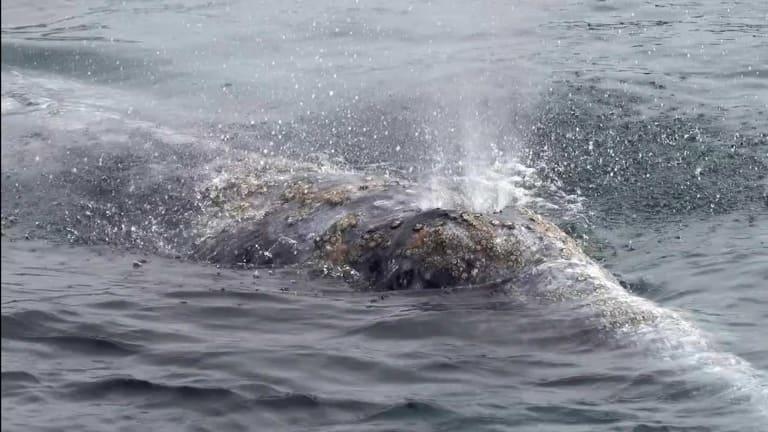 Whales So Close!