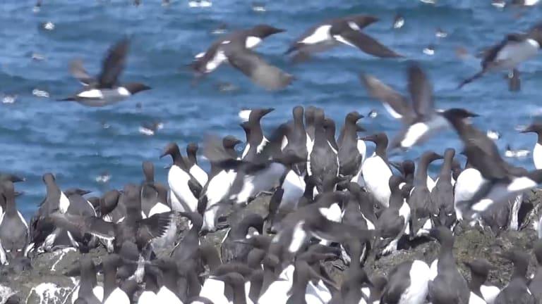 A Blizzard of Birds 2