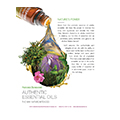 Authentic Essential Oils Brochure (Pack Of 10) Eng
