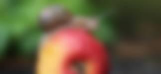 Hou een appeltjesgevecht