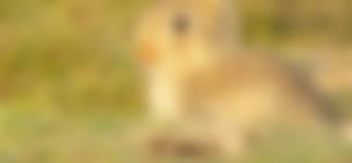 Konijnenpad bij Natuurkampeerterrein De Stiente