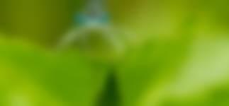 Blauwe breedscheenjuffer gemaakt in de  Stippelberg