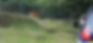 Edelhert spotten tijdens Top 5 safari met boswachter