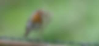 Bouwmarkt voor de vogels