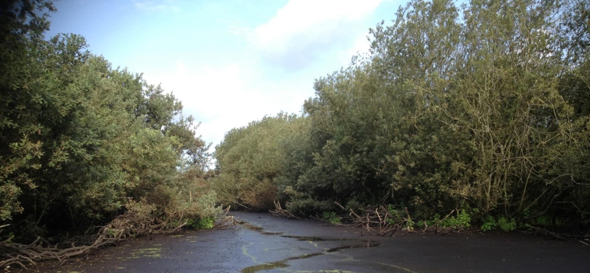 Nestentelling Quackjeswater levert 270 lepelaarsnesten op