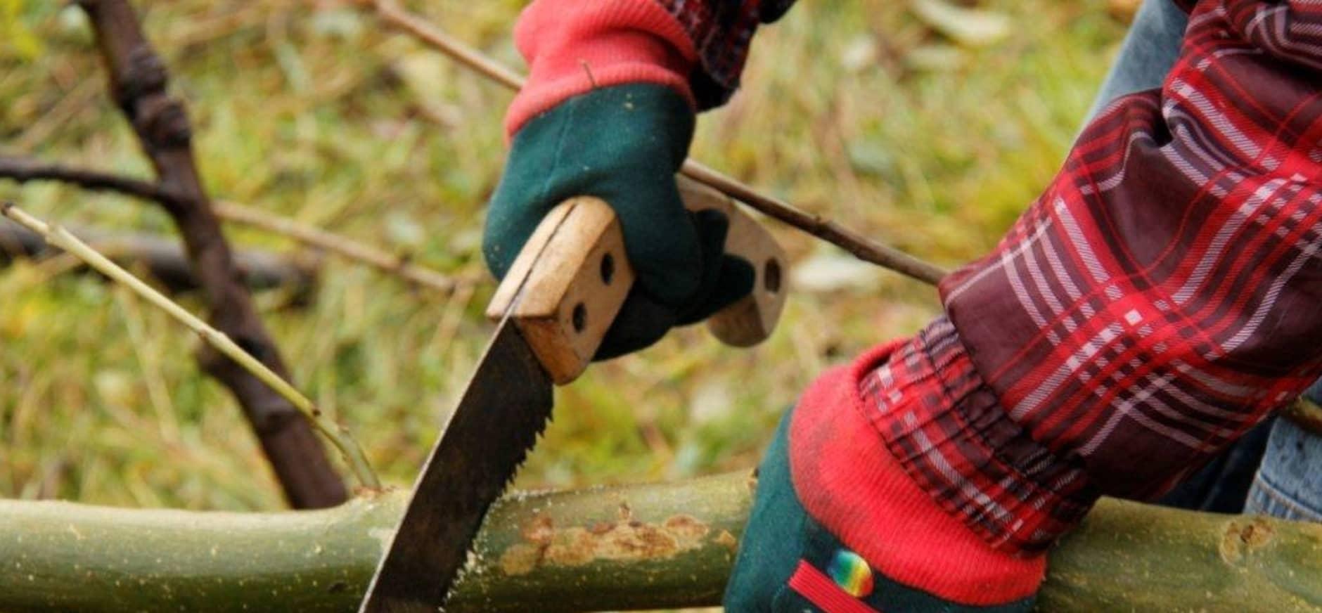Natuurwerkdag 5 november: Doe mee in de Leuvenumse bossen